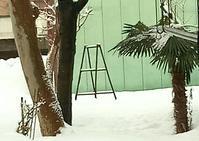 20180201 【積雪】脚立 - 杉本敏宏のつれづれなるままに
