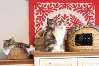 2月の5猫集合写真 - きょうだい猫と仲良し暮らし