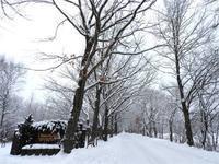 今週末の天気と気温(2月1週目):積雪15cmほど。 - 北軽井沢スウィートグラス
