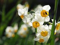 お花たち - いつかみたソラ