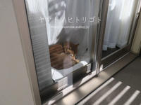 わが家の即席サンルーム - yamatoのひとりごと