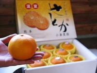 究極の柑橘「せとか」平成30年の先行予約受付スタート!選び抜かれた『プリンセスせとか』を届けます! - FLCパートナーズストア