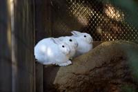 三連兎 - 動物園へ行こう