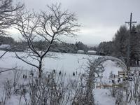 雪の朝 - 西軽井沢-御代田移住生活