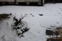 また雪が降りました - 猫と自然と散歩の日々
