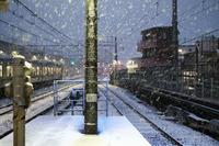 降雪の朝 - BobのCamera