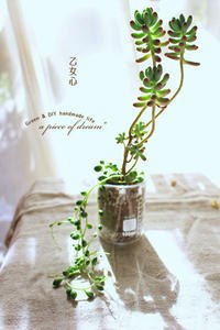 「乙女心」と ひなたぼっこ 多肉植物 - a piece of dream* 植物とDIYと。