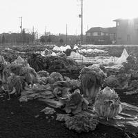 コンパニオンより枯れた白菜の方が… - 一人の読者との対話