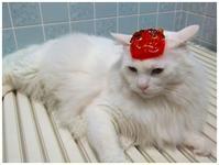 白猫が鬼になる -  one's  heart