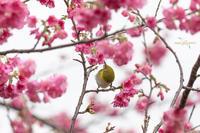 一足早い春 - 続 いまともフォト通信