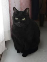 猫のお留守番 カーンちゃん編。 - ゆきねこ猫家族
