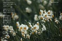 日常に咲く - Poetry Garden 詩庭