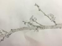 梅枝。 - 『一日一畫』 日本画家池上紘子