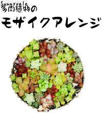 2月One-day Lesson 多肉植物の会のお知らせ - さにべるスタッフblog     -Sunny Day's Garden-