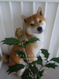 鬼役は今年も柴犬です。【フォトムービーあり】 - yamatoのひとりごと