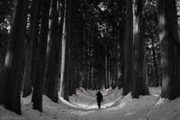 杉木立 - フォトな日々
