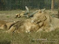 毛繕いのお相手は。 ~ 12 years ago ~ - 朝から晩まで動物園。(サファリもね)