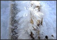 霜の花 - 好い加減に過ごす2