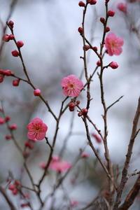 春を告げる - ecocoro日和