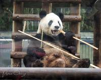 上野動物園2018年2月2日 - お散歩ふぉと