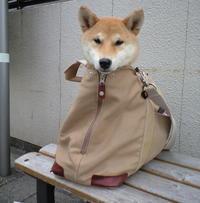 プロフェッショナルのわんこ特集 - 柴犬さくら、北国に生きる
