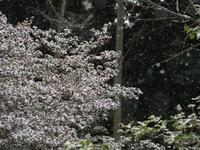 1月28日 種松山山頂園地 - 風まかせ、カメラまかせ