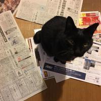 猫は新聞が大好き? - GARALOG
