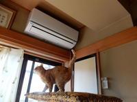 やりたい放題 - 愛犬家の猫日記