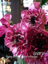 『やって来た〜♪』 -  Flower and cafe 花空間 ivory (アイボリー)