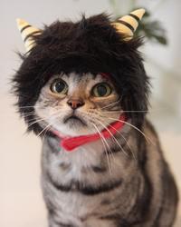 今年も鬼にゃんになったにゃ☆ - 愛しき猫にゃん♪