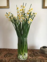 2018  今治2月4日立春と葉牡丹 - 好きなものに囲まれて2