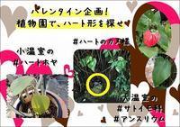狙え、インスタ映え!バレンタイン編 - 手柄山温室植物園ブログ 『山の上から花だより』