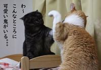 遅くなったけど - ぎんネコ☆はうす