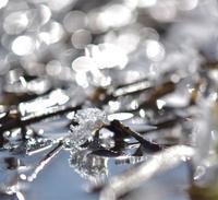 雪の妖精さん - ルンコたんとワタシの心模様