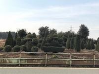 可愛い植木 - つれづれ日記