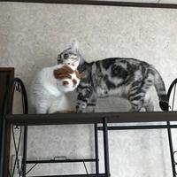 猫の日常 - 土筆の庭
