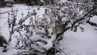 受診 - Winter PHOTO