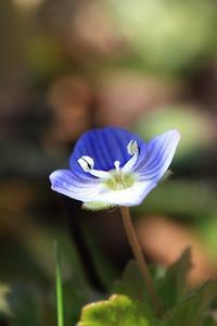 季節の花を撮る③ - miyabine's フォト日記2~身の周りのきれい・可愛い・面白い~