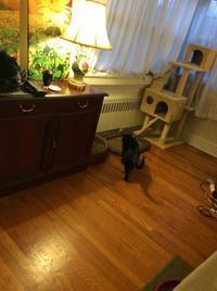 ネコとおうちごはん: 鶏肉の照り焼き - にゃんこと暮らす・アメリカ・アパート(その2)