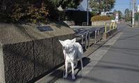 Vol.1294 樽町札之下公園 - 小太郎の白っぽい世界