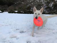 大雪レオン公園 3日目 - レオンと杏梨の ほのぼの日記