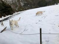 大雪レオン公園 5日目 - レオンと杏梨の ほのぼの日記