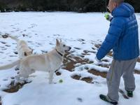 大雪レオン公園 6日目 - レオンと杏梨の ほのぼの日記