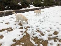 大雪レオン公園 7日目 - レオンと杏梨の ほのぼの日記