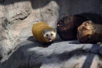 キテン - 動物園へ行こう