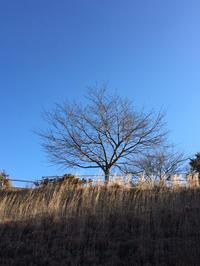 晴れのち雪、雪のち晴れ…〜この冬一番の冷え込み〜 - CROSSE 便り