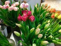 チューリップのご紹介 - ~ Flower Shop D.STYLE ~ (新所沢パルコ・Let's館1F)