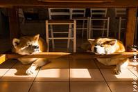 まぶしい2匹 - ノルマン犬猫日記