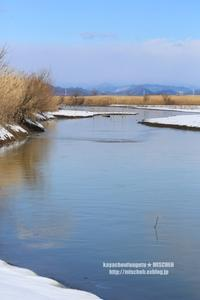 雪原のオオジュリン - 花野鳥風月MISCHEH