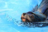 真冬の動物園 - 野沢温泉とその周辺いろいろ